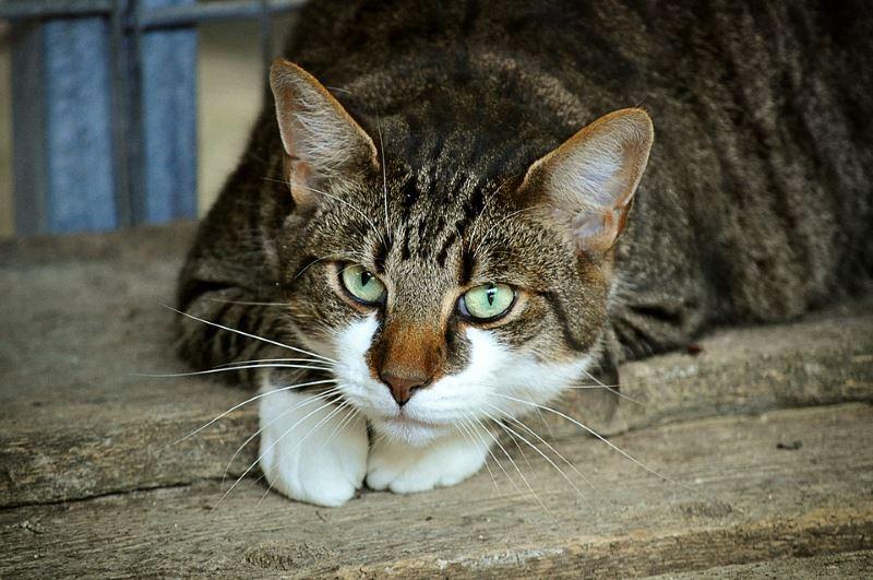 Métodos seguros y naturales para ahuyentar gatos de tu hogar